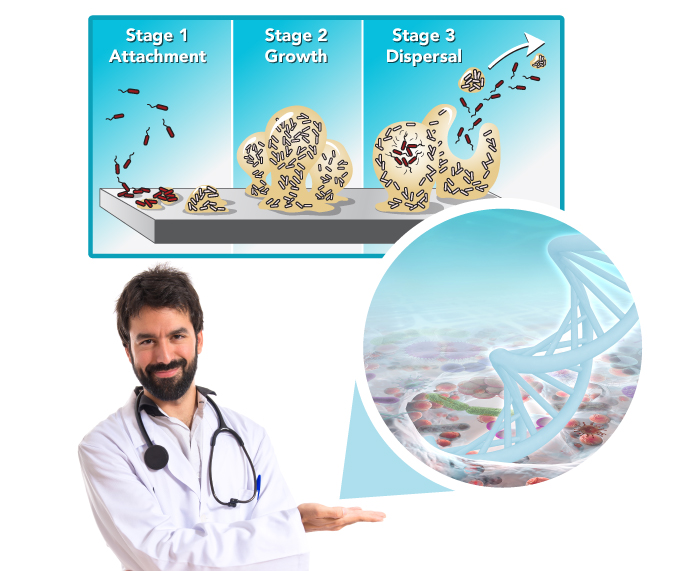 Doctor Showing Stages of Biofilm Development