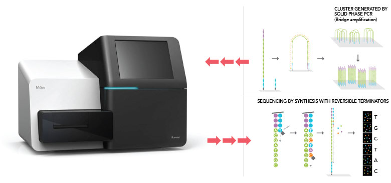 PCR & NGS Process | Next-Gen DNA Sequencing