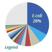 Ecoli Pie Graph